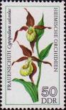 Венерин башмачок Cypripedium (calceolus)